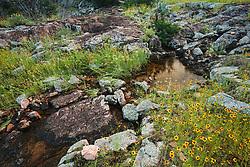 Wildflowers, Inks Lake State Park, Texas, USA