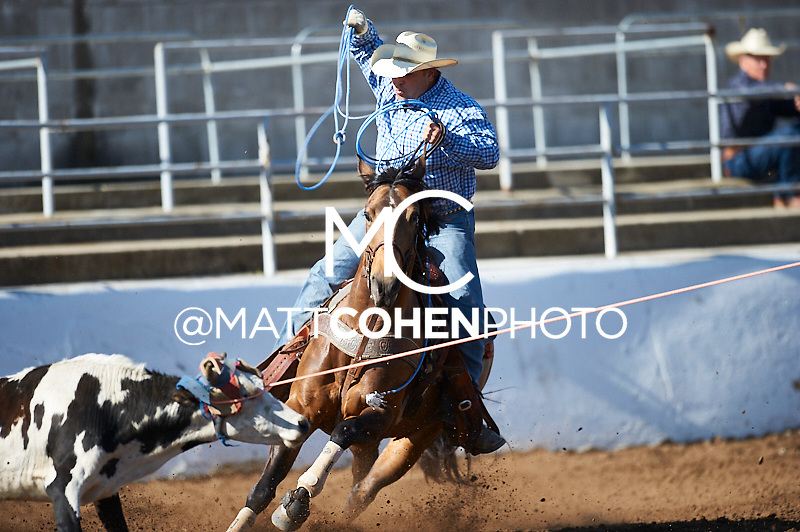 Team roper Jeffrey Larson of Turlock, CA competes at the Clovis Rodeo in Clovis, CA.<br /> <br /> <br /> UNEDITED LOW-RES PREVIEW<br /> <br /> <br /> File shown may be an unedited low resolution version used as a proof only. All prints are 100% guaranteed for quality. Sizes 8x10+ come with a version for personal social media. I am currently not selling downloads for commercial/brand use.