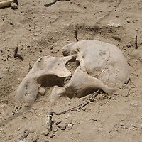 A Bronze-age skull discovered at an archaeological site near Muren, Mongolia.  This  may be 2700+ years old.