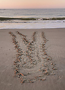 The tracks left behind in the sand from an endangered loggerhead sea turtle that crawled ashore to nest May 16, 2021 in Isle of Palms, SC. Sea turtles come ashore at night in the spring and summer months and lay their eggs in nests in the sand dunes along the beach.