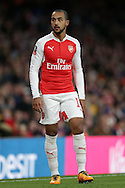 Theo Walcott of Arsenal looks on. The Emirates FA cup, 4th round match, Arsenal v Burnley at the Emirates Stadium in London on Saturday 30th January 2016.<br /> pic by John Patrick Fletcher, Andrew Orchard sports photography.