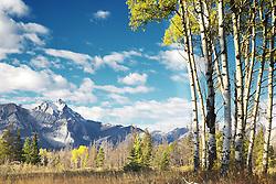 Chetamon Mountain, Golden Aspen, Jasper National Park