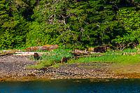 Magoun Islands State Marine Park, Krestof Sound,  Inside Passage, Southeast Alaska USA.