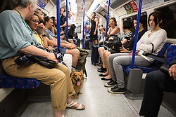 © Licensed to London News Pictures. 01/07/2015. London, UK. A dog pants to keep cool on a morning in which commuters and tourists struggle with the intense heat on the London Underground this morning (01/07) on what is set to be the hottest day this decade. Photo credit : James Gourley/LNP