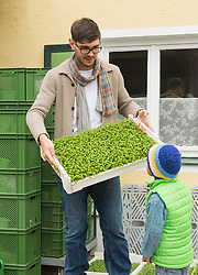 Organic farmer showing a plant crate for salad to his son in farm, Bavaria, Germany