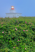 Grand Passage Lighthouse and rose bushes<br /> Brier Island<br /> Nova Scotia<br /> Canada
