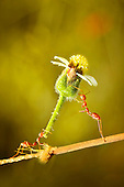 Ant appears to be giving its friend a flower