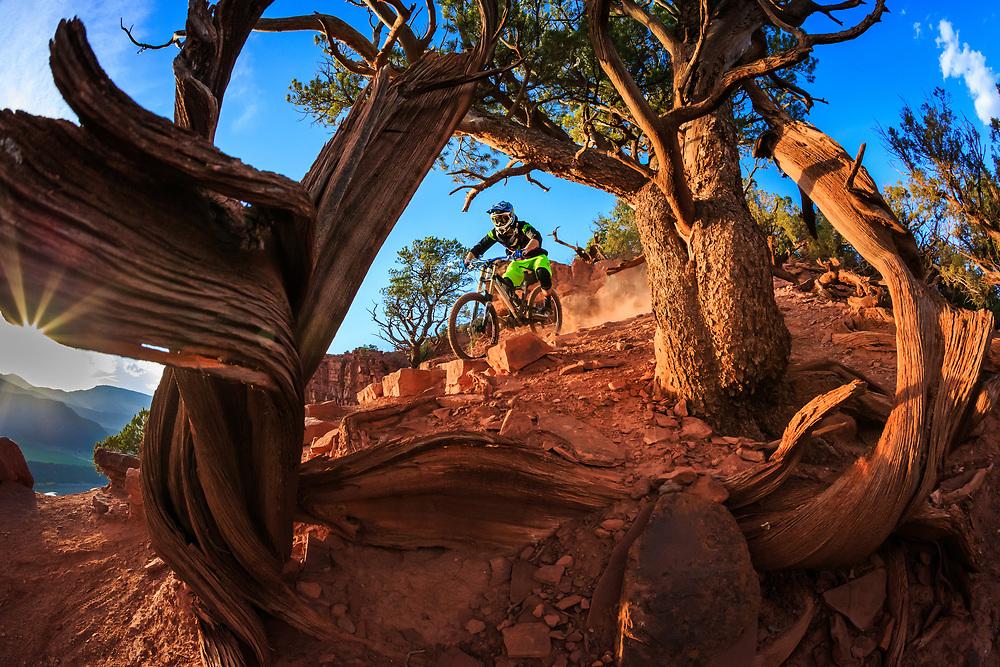 Sam Stevens rolls downhill through the pinyon pines near Carbondale Colorado.