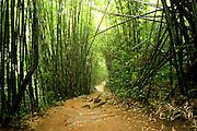 The rain forest Chiang Mai,  Thailand