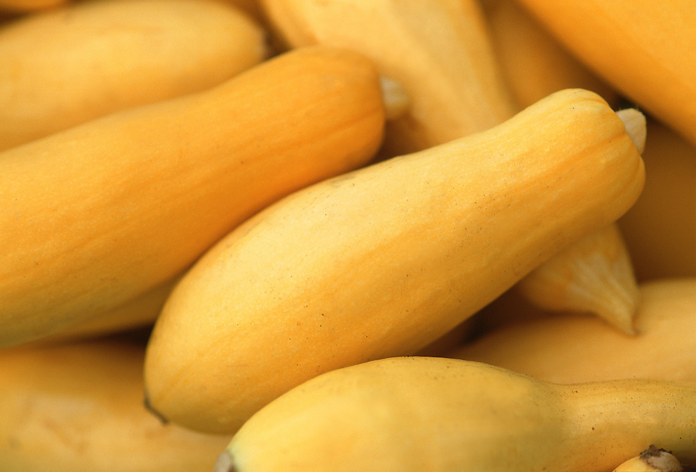 Close up selective focus photograph of a pile of Yellow Summer Squash