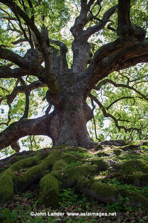 Tree Roots, Branches and Moss