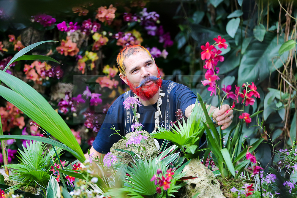 © Licensed to London News Pictures. 06/02/2020. London, UK. Florist and Kew volunteer HENCK ROLING applies the final touch to Orchids during press preview of the 25th Kew Orchid Festival at Kew Royal Botanical Gardens. This year's theme is around the wonders of Indonesia and the festival runs from 8 February to 8 March 2020. Photo credit: Dinendra Haria/LNP