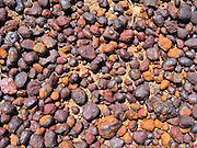 Curiously weathered reddish purple and orange pebbles lie on bluffs above Rocky River Beach, in Flinders Chase National Park, Kangaroo Island, South Australia.