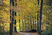 Nederland, Ubbergen, 3-11-2010Het was vandaag een dag met mooi herfstweer. Herfstbos. Heerlijkheid Beek. Geldersch landschap. Mooi weer, herfstlichtFoto: Flip Franssen/Hollandse Hoogte