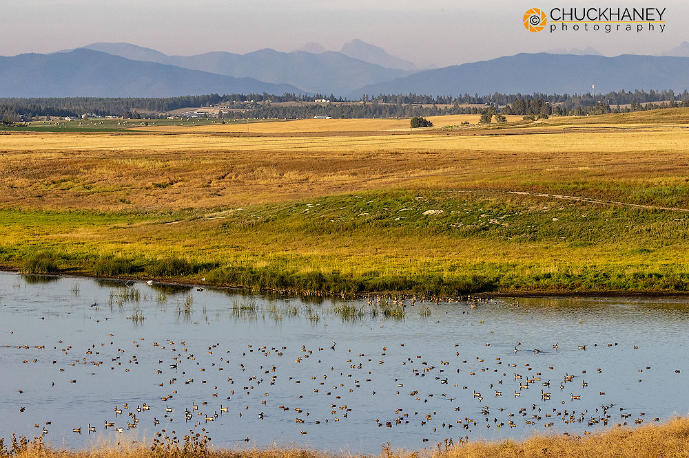 West Valley Bird and Wildlife Viewing Area teeming with birds in the Flathead Valley, Montana, USA