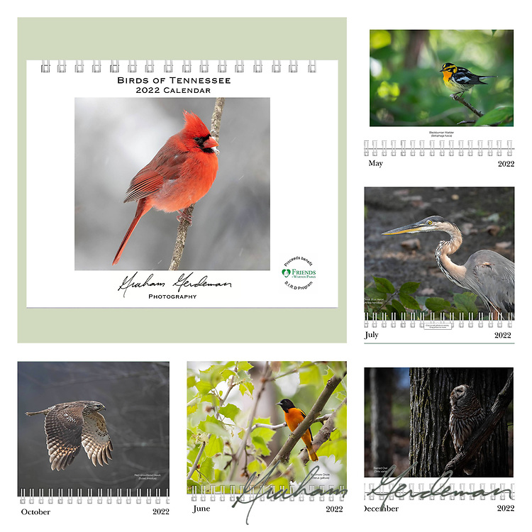 """2022 Birds of Tennessee Calendar<br /> _____<br /> <br /> Featuring 12 months of birds of the great state of Tennessee. All of the birds depicted are either Summer or Winter residents in Tennessee, or are at least annual migrants in Spring and Fall. <br /> <br /> At least 50% of the profits of this annual calendar will go to the B.I.R.D. Research program at Warner Park Nature Center in Nashville, funded through Friends of Warner Parks, a 501(c)(3) nonprofit organization (warnerparks.org).<br /> <br /> Also available locally in Nashville at the Wood Thrush Shop, area Wild Birds Unlimited Stores, and the Shelby Bottoms Nature Center, in conjunction with my """"Our Vanishing Birds"""" photo exhibit on display there.<br /> <br /> Click """"Add to Cart"""" to purchase (download option not available)"""