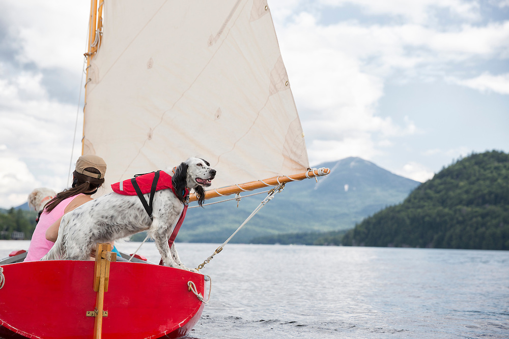 English setter out for a sail with her owner