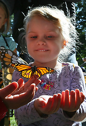 September 9, 2017 - Minneapolis, Minn, USA - United States - Three-year old Helena Schaffer of Minneapolis watched as a male monarch was released.   ]  Shari L. Gross • shari.gross@startribune.com   ..  ..The 9th annual Minneapolis Monarch Festival was held at Lake Nokomis in Minneapolis, Minn., on Saturday, Sept. 9, 2017.  People tagged monarchs and released them before they start their migration down to Mexico. (Credit Image: © Shari L. Gross/Minneapolis Star Tribune via ZUMA Wire)
