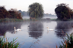 © Licensed to London News Pictures 20/10/2018<br /> SIDCUP,UK.<br /> Two white swans swimming together in the mist.<br /> A runner making an early fitness start to the day.<br /> A cold autumnal mist at Footscray Meadows this morning in Sidcup.<br /> Photo credit: Grant Falvey/LNP
