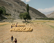 Children and women gathering hay to dry it. The traditional life of the Wakhi people, in the Wakhan corridor, amongst the Pamir mountains.
