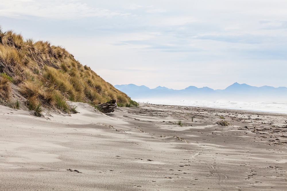 Grassy sand dunes of Fort Stevens State Park along the Pacific coast, Oregon, USA.