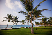Palm trees scattered throughout a green field on the ocean in the Dominican Republic