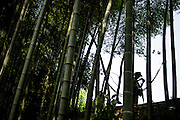 """A Chinese tourist is seen in silohuette between the trees in the Bamboo Sea in Yibin, August 06, 2014.<br /> <br /> Shunan Bamboo Sea (Chinese: 蜀南竹海;pinyin: shǔnánzhúhǎi) covers an area of over 120 kilometers in Sichuan Province.<br /> This forest has won its fame for its unique green and graceful trees: bamboos are here, there and everywhere.<br /> It is one of the shooting places of the Oscar award- winning movie """"Crouching Tiger, Hidden Dragon"""" directed by Ang Lee.<br /> <br /> © Giorgio Perottino"""