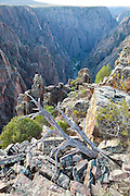 A dead snag on the canyon rim at Island Peaks, Black Canyon of the Gunnison National Park, Colorado.
