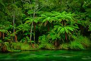Oceania, New Zealand, Aotearoa, North Island, Kawerau, Tarawera river