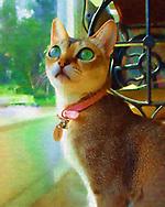 Rockville Centre, New York, U.S. 2003. Singpura Cat Minnie looks up as sits up next to patio glass door.