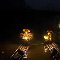 Commorant Fishing