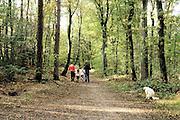 Nederland, Nijmegen, 30-10-2016Dit weekeind gaf prachtige herfstdagen.Mensen wandelen soms met hond of kinderwagen, door het kleurrijke bos. Een hond zit te poepen .FOTO: FLIP FRANSSEN