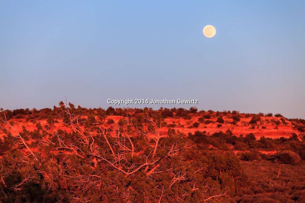 The full moon rises over desert brush and hills glowing red in the last rays of the setting sun on the high plateau northwest of Moab, Utah.<br /> WATERMARKS WILL NOT APPEAR ON PRINTS OR LICENSED IMAGES.