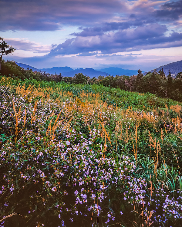 Wildflowers in bloom on hillside & views to distant montains, Livermore, NH