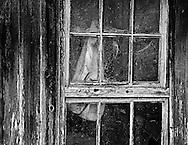 Jacket in Window, Half Moon Bay, CA