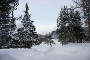 OUTSIDE MALOJA PALACE. St. Moritz, Switzerland. 23 January 2009 *** Local Caption *** -DO NOT ARCHIVE-© Copyright Photograph by Dafydd Jones. 248 Clapham Rd. London SW9 0PZ. Tel 0207 820 0771. www.dafjones.com.<br /> OUTSIDE MALOJA PALACE. St. Moritz, Switzerland. 23 January 2009