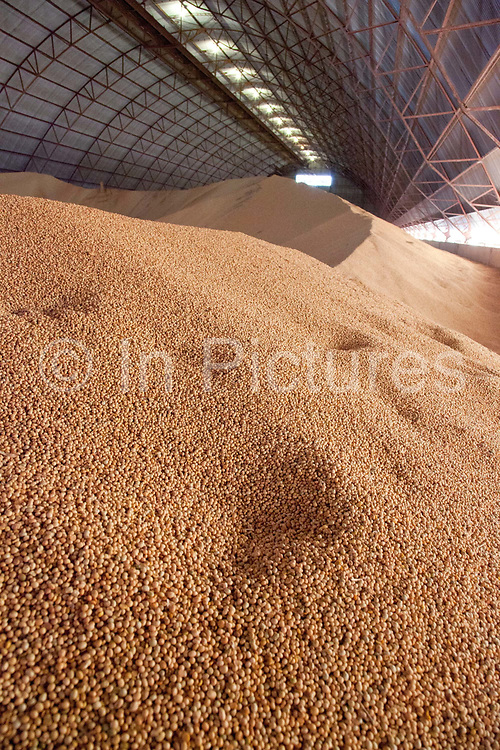 Grain storage barn on a large soya and maize farm, this warehouse holds approximately 22,000 tonnes of grain. Brazil is the largest producer of Sugar and Beef, then second for Soya and third for Maize. Many of the farms are in the state of Mato Grosso and Mato Grosso do Sul, they are often enournmous, stretching for miles kilometres. A lot of the crops are processed on site and kept in large warehouses or silos.