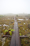 Boardwalk leading across Alakai Swamp, in Kokee State Park, Kauai, Hawaii.