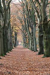 Zonnestraal, Hilversum, Noord Holland, Netherlands