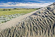 Ripples, sand dunes and vegetation<br /> Great Sand Hills<br /> Saskatchewan<br /> Canada