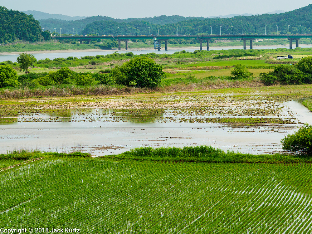 09 JUNE 2018 - IMJINGAK, PAJU, SOUTH KOREA: Rice fields in South Korea with the Imjin River in the background on the South Korean side of the Korean DMZ in Imjingak. Imjingak is a park and greenspace in South Korea that is farthest north most people can go without military authorization. The park is on the south bank of Imjin River, which separates South Korea from North Korea and is close the industrial park in Kaesong, North Korea that South and North Korea have jointly operated.     PHOTO BY JACK KURTZ