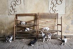 Cats on shelves, Fes al Bali medina, Fes, Morocco