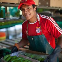 Portrait of David Calderón packing organic Fairtrade bananas in one of several processing plants at Fairtrade-certified banana producers APPBOSA in Samán, Marcavelica, Piura, Peru.