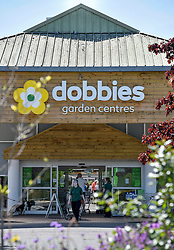 A worker wearing a visor at Dobbies Garden Centre in Lasswade, Midlothian directs customers on the first day of phase 1 of the reduction in Covid lockdown in Scotland. The garden centres saw long queues waiting to get in.<br /> <br /> © Dave Johnston / EEm