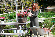 Woman works in her garden arranging flowers in a flowerpot