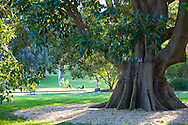 The Royal Botanic Gardens in Sydney, Australia, are the largest of three major botanical gardens open to the public in Sydney and are free to access and open every day of the year.