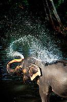 Sri Lanka -Kandy - Elephant