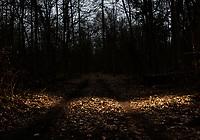 Puszcza Bialowieska, 02.2020. N/z pejzaz Puszczy Bialowieskiej noca, lesna droga fot Michal Kosc / AGENCJA WSCHOD