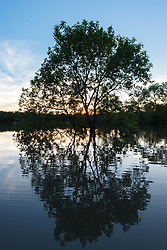 Flooded forest at sunset  near Big Spring after Trinity River flood, Great Trinity Forest, Dallas, Texas, USA