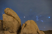 In December the constellation Orion rises in the east immediately after sunset. While camping in Joshua Tree National Park, I picked a campsite that faced a boulder formation in that direction. When clouds moved in, I wasn't sure I would get any pictures. But then a small gap appeared, leaving halos around the brighter stars. The red supergiant star Betelgeuse is visible in the center. It is one of the largest stars in the Milky Way, 1400 times the size of the sun. It's also a variable star, which means the brightness changes regularly. But in recent days it has been attracting attention because it's currently dimmer than ever recorded before. Betelgeuse is at the end of its stellar life cycle and when it goes supernova its brightness in Earth's sky will rival that of the full moon. Since the star is 640 light years away, it may have already exploded centuries ago. But the likelihood of seeing a supernova anytime soon is still very small and they remain unpredictable.